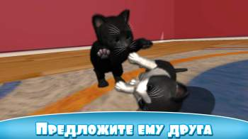 Daily Kitten : виртуальный кот